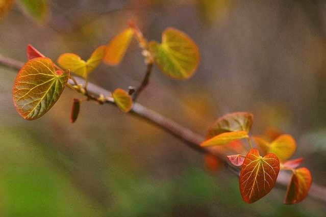 leaves-twig
