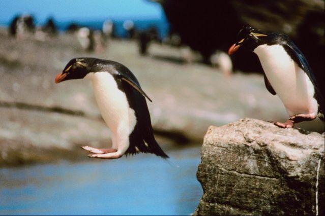penguin-jump
